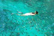 ดำน้ำ-ดูปะการัง-เกาะไข่