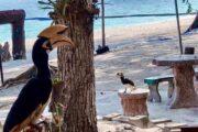 นกเงือก-เกาะเฮ-กาฮังบีช