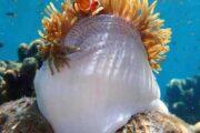 ปลานีโม-ดำน้ำตื้น-เกาะรอก-เกาะห้า