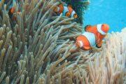 ปะการัง-ดำน้ำตื้น-หมู่เกาะสุรินทร์