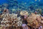 ปะการัง-น้ำตื้น-อุทยานแห่งชาติ-หมู่เกาะสุรินทร์