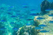 ปะการัง-น้ำตื้น-เกาะสิมิลัน