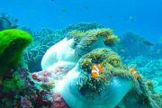 ปะการัง-เกาะรอก-ทัวร์-ดำน้ำตื้น
