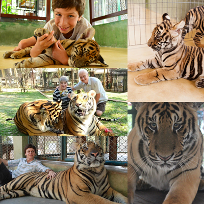 tiger-king-dom-phuket-activities-play-with-animal