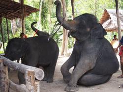 ทัวร์-พังงา-ล่องแก่ง-นั่ง-ช้าง-ขับ-ATV-โหนสลิง-A1-20