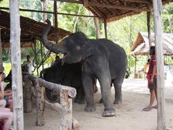 ทัวร์-พังงา-ล่องแก่ง-นั่ง-ช้าง-ขับ-ATV-โหนสลิง-A1-21