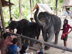 ทัวร์-พังงา-ล่องแก่ง-นั่ง-ช้าง-ขับ-ATV-โหนสลิง-A1-22