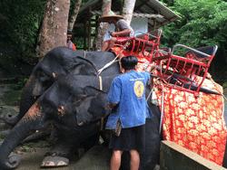 ทัวร์-พังงา-ล่องแก่ง-นั่ง-ช้าง-ขับ-ATV-โหนสลิง-A1-6