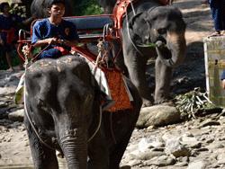 ทัวร์-พังงา-ล่องแก่ง-นั่ง-ช้าง-ขับ-ATV-โหนสลิง-A1-7
