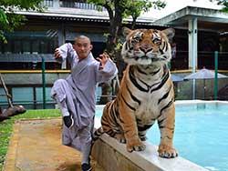 ไทเกอร์-คิงดอม-(Tiger-Kingdom)-สวนเสือภูเก็ต-จำหน่ายบัตร-เข้าชม-10