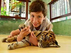 ไทเกอร์-คิงดอม-(Tiger-Kingdom)-สวนเสือภูเก็ต-จำหน่ายบัตร-เข้าชม-12