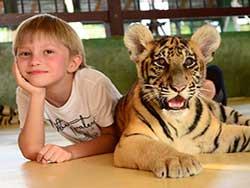 ไทเกอร์-คิงดอม-(Tiger-Kingdom)-สวนเสือภูเก็ต-จำหน่ายบัตร-เข้าชม-13