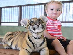 ไทเกอร์-คิงดอม-(Tiger-Kingdom)-สวนเสือภูเก็ต-จำหน่ายบัตร-เข้าชม-6