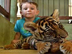 ไทเกอร์-คิงดอม-(Tiger-Kingdom)-สวนเสือภูเก็ต-จำหน่ายบัตร-เข้าชม-8