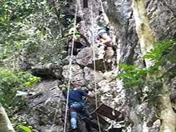 กิจกรรมผาดโผนบนต้นไม้-โหนสลิง-กระบี่-ทรีท็อป-แอดเวนเจอร์-18