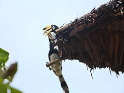 ทัวร์วันเดย์ทริป-ราชาน้อย-หาดกล้วย-บานาน่า-บีส-เกาะเฮ-เรือเร็ว-เที่ยวภูก็ต-ราคาถูก-13