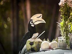 ทัวร์วันเดย์ทริป-ราชาน้อย-หาดกล้วย-บานาน่า-บีส-เกาะเฮ-เรือเร็ว-เที่ยวภูก็ต-ราคาถูก-2