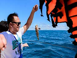 ทัวร์วันเดย์ทริป-เกาะไม้ท่อน-ล่องเรือชมปลาโลมา-โดยเรือคาตามารัน-เที่ยวภูเก็ต-6