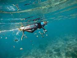 ภูเก็ต-ทัวร์-ดำน้ำ-ชมปะการัง-เกาะพีพี-อ่าวมาหยา