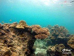 ทัวร์-ดำน้ำ-ดูปะการัง-เกาะพีพี