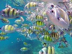 ทัวร์-ภูเก็ต-ดำน้ำ-ดูปลา-เกาะพีพี