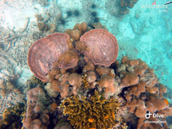 ปะการัง-หมู่เกาะพีพี-กระบี่