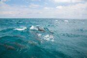 ดูโลมา-เกาะไม้ท่อน-เรือยอร์ช-คาตามารัน