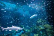 เปิด-โลก-ใต้-ทะเล-พิพิธภัฑ์-สัตว์น้ำ-ภูเก็ต